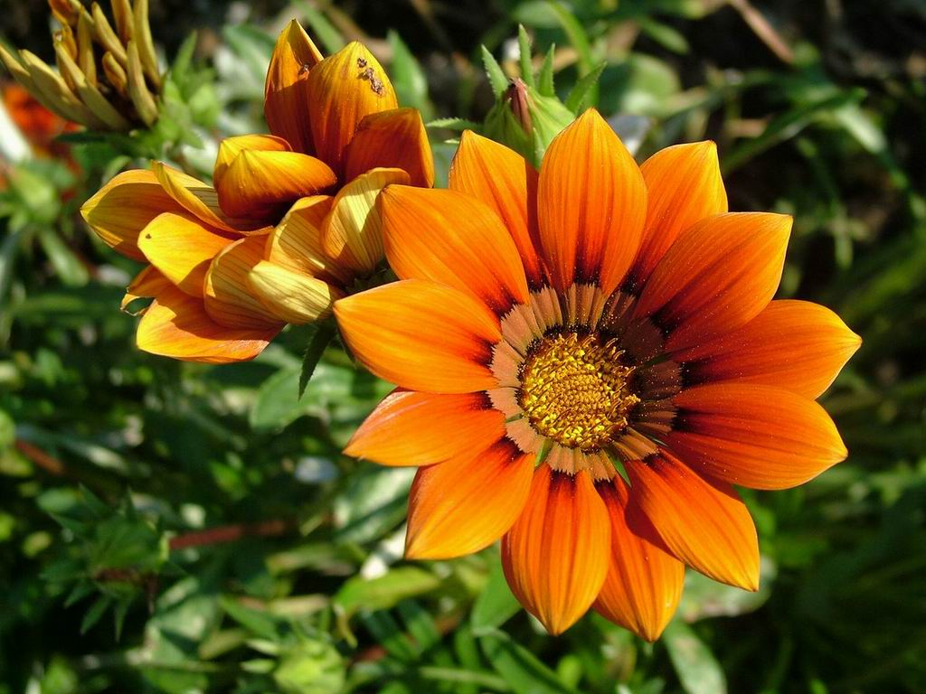 Evolution of flowering plants